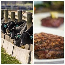 Cattle and Steak